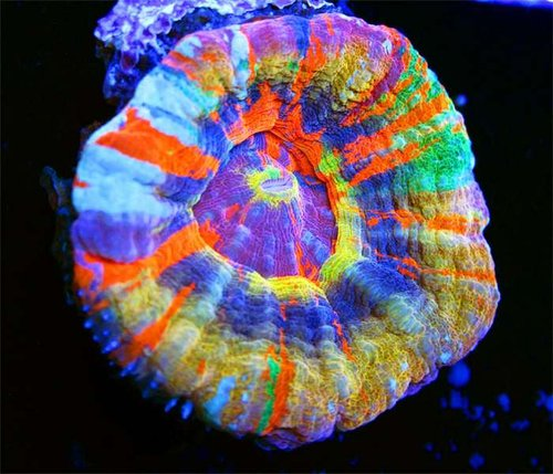 Sexy-Corals-Best-Scoly-on-Earth.jpg
